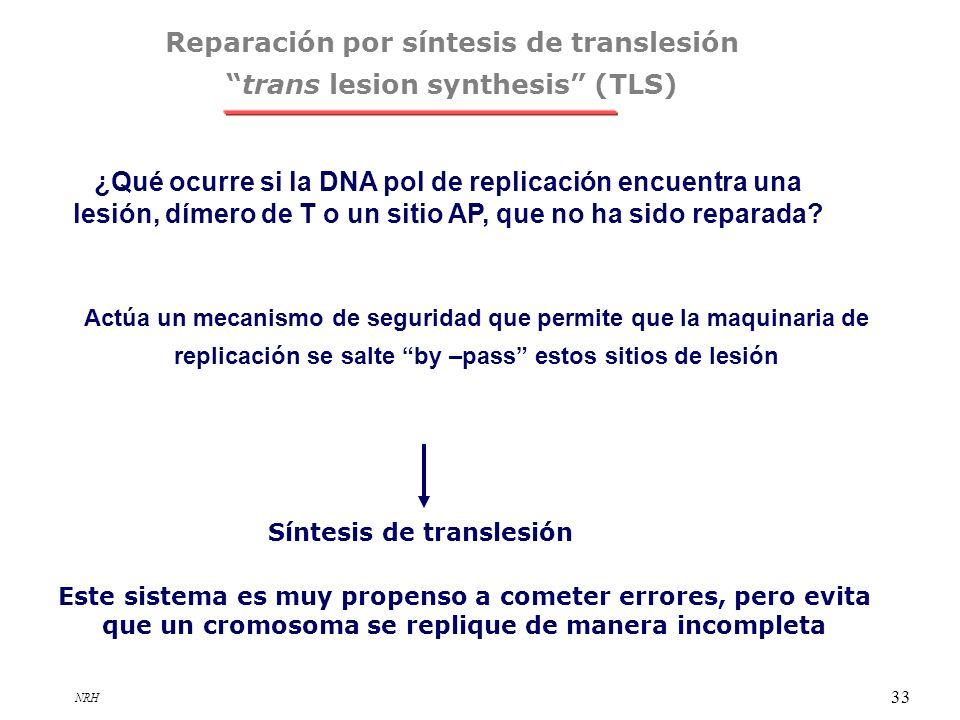 NRH 33 Reparación por síntesis de translesión trans lesion synthesis (TLS) Actúa un mecanismo de seguridad que permite que la maquinaria de replicació