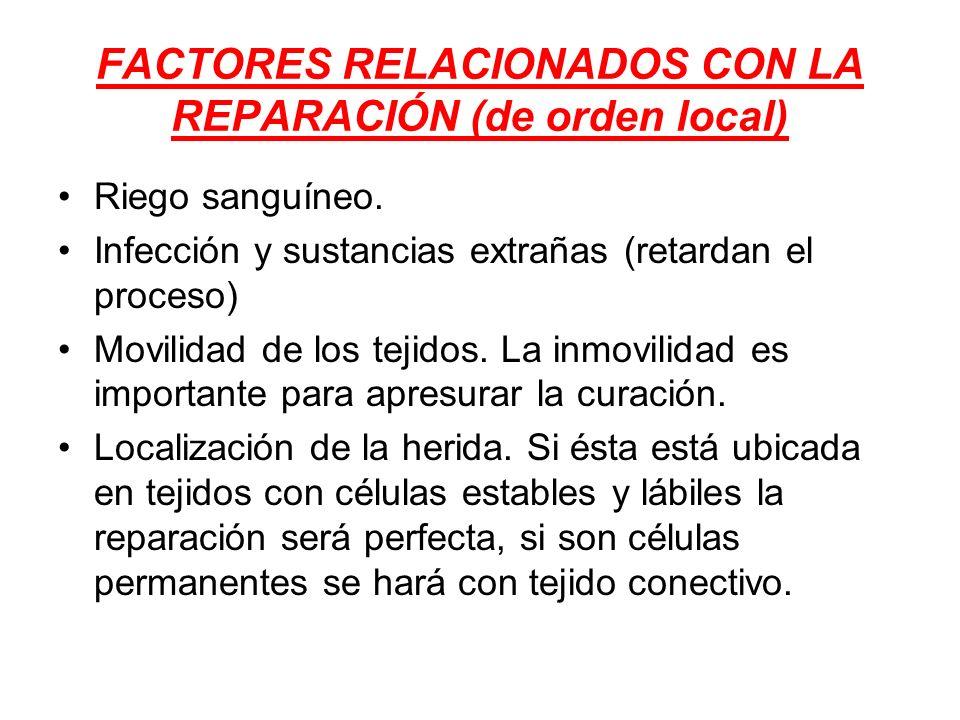 FACTORES RELACIONADOS CON LA REPARACIÓN (de orden local) Riego sanguíneo. Infección y sustancias extrañas (retardan el proceso) Movilidad de los tejid