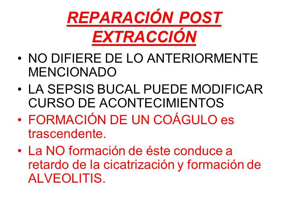 REPARACIÓN POST EXTRACCIÓN NO DIFIERE DE LO ANTERIORMENTE MENCIONADO LA SEPSIS BUCAL PUEDE MODIFICAR CURSO DE ACONTECIMIENTOS FORMACIÓN DE UN COÁGULO