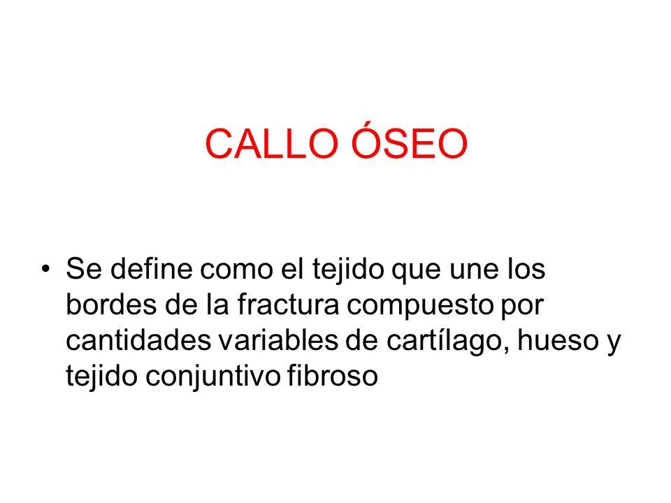CALLO ÓSEO Se define como el tejido que une los bordes de la fractura compuesto por cantidades variables de cartílago, hueso y tejido conjuntivo fibro