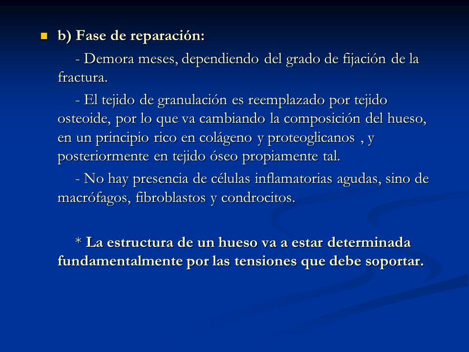 b) Fase de reparación: b) Fase de reparación: - Demora meses, dependiendo del grado de fijación de la fractura.