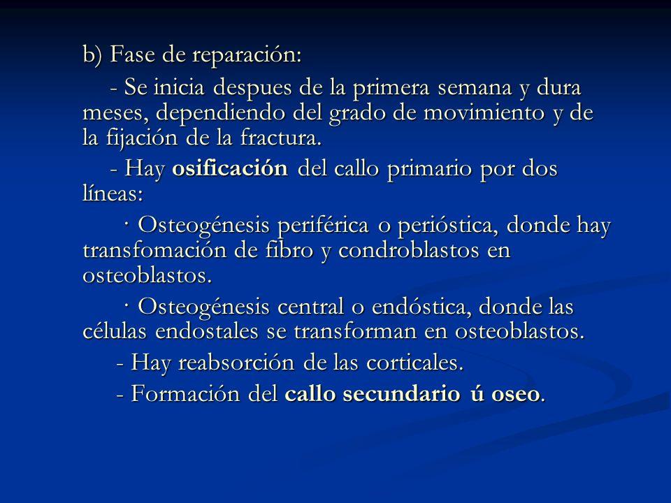 b) Fase de reparación: b) Fase de reparación: - Se inicia despues de la primera semana y dura meses, dependiendo del grado de movimiento y de la fijación de la fractura.