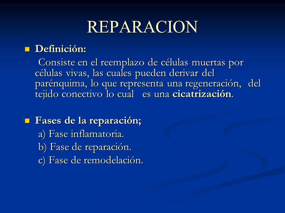 REPARACION Definición: Definición: Consiste en el reemplazo de células muertas por células vivas, las cuales pueden derivar del parénquima, lo que representa una regeneración, del tejido conectivo lo cual es una cicatrización.