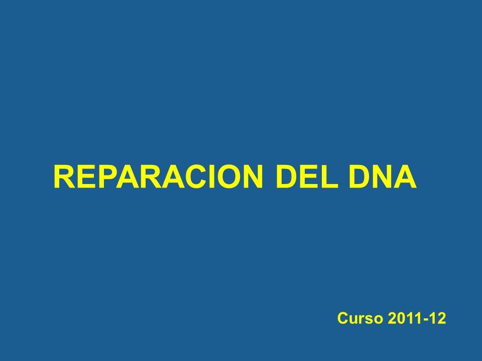 REPARACION DEL DNA Curso 2011-12