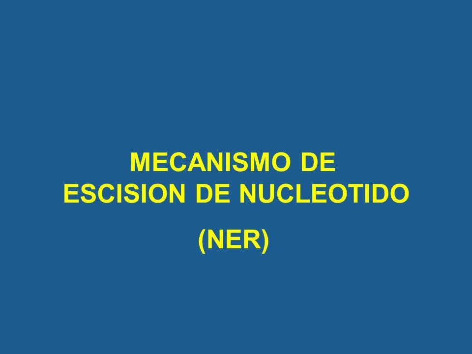 MECANISMO DE ESCISION DE NUCLEOTIDO (NER)