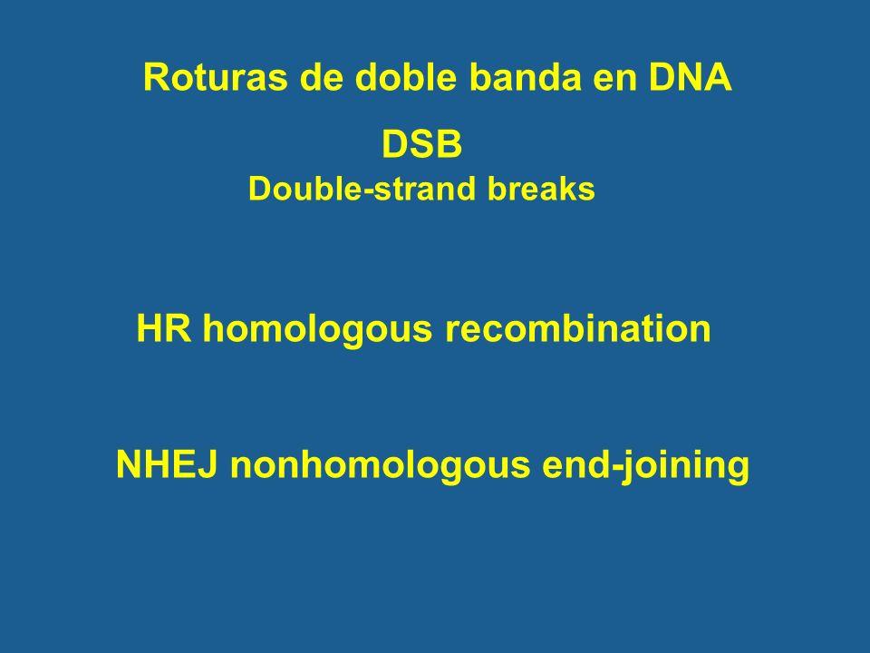 Roturas de doble banda en DNA NHEJ nonhomologous end-joining HR homologous recombination DSB Double-strand breaks