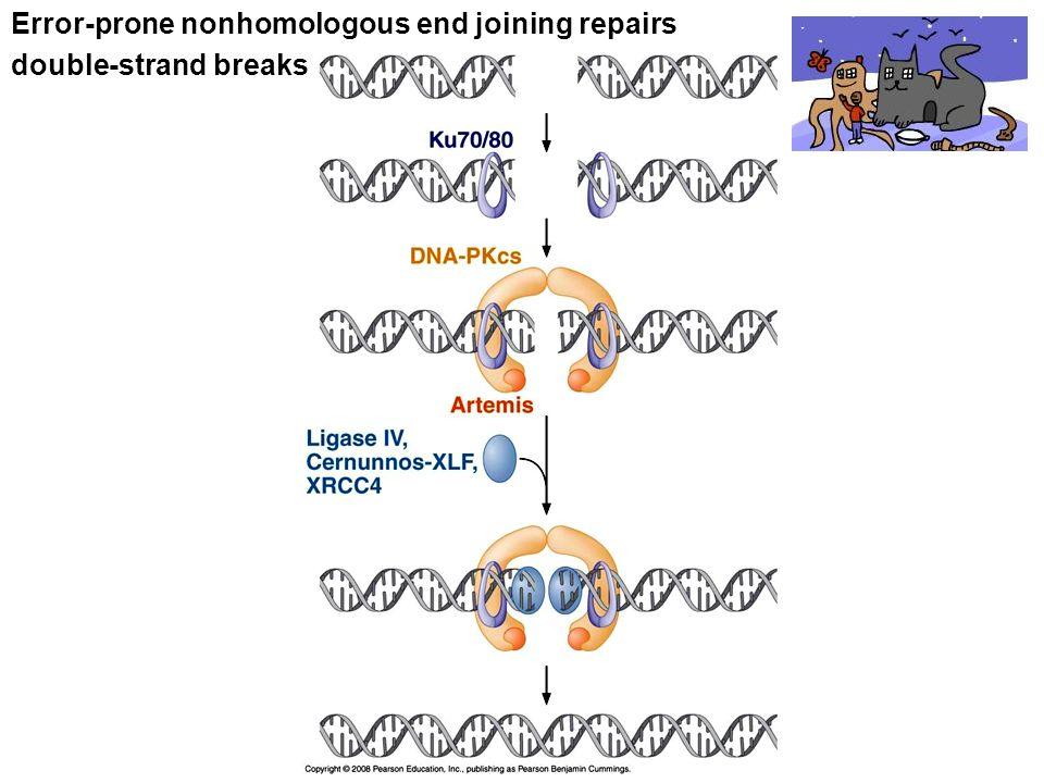Error-prone nonhomologous end joining repairs double-strand breaks