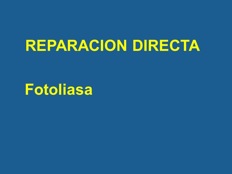 REPARACION DIRECTA Fotoliasa