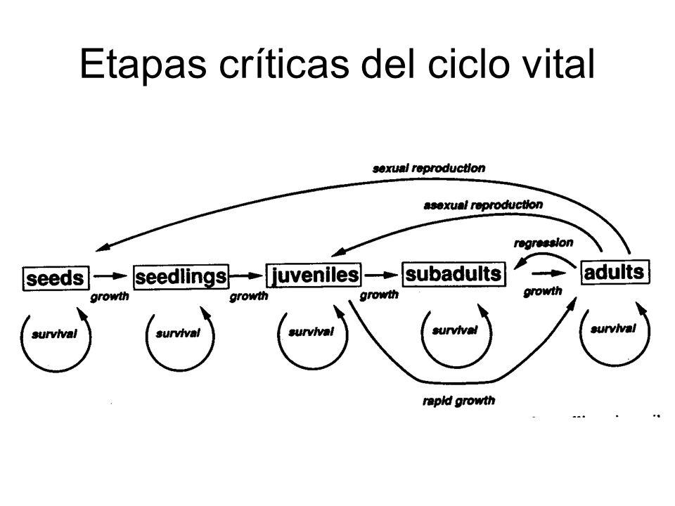 Etapas críticas del ciclo vital