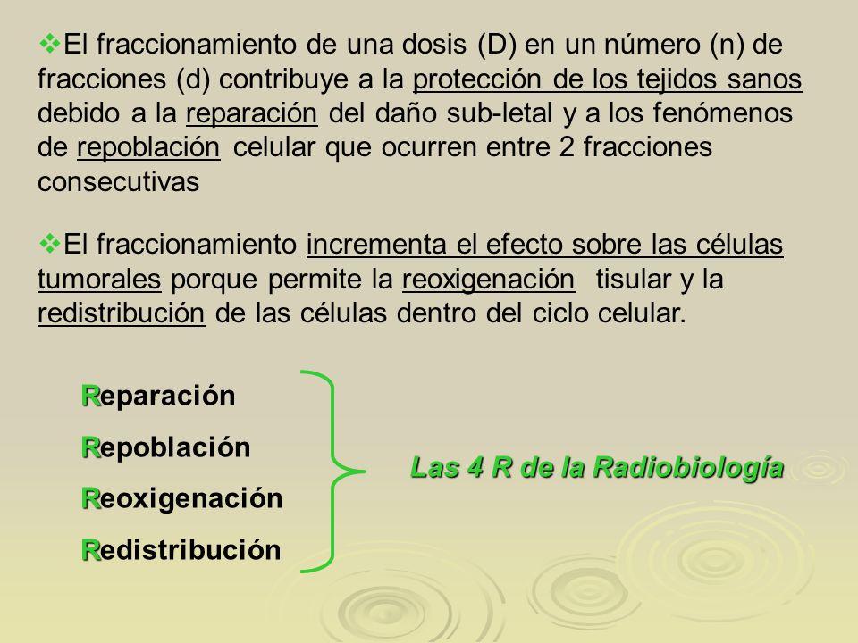 R Reparación R Repoblación R Reoxigenación R Redistribución Las 4 R de la Radiobiología El fraccionamiento de una dosis (D) en un número (n) de fracci