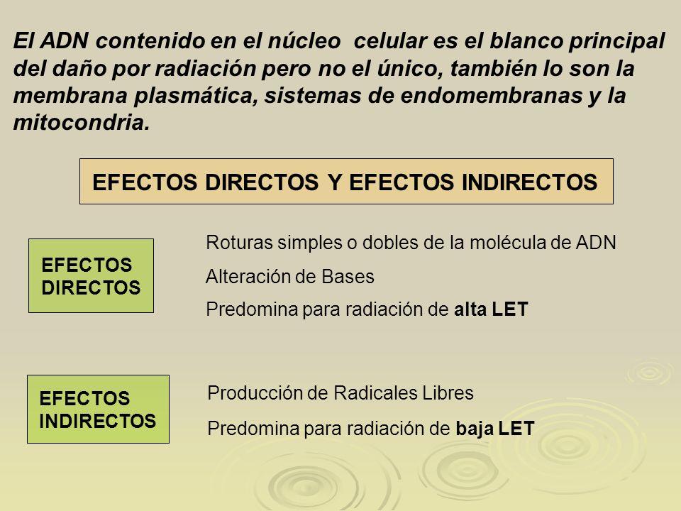 EFECTOS DIRECTOS Y EFECTOS INDIRECTOS El ADN contenido en el núcleo celular es el blanco principal del daño por radiación pero no el único, también lo