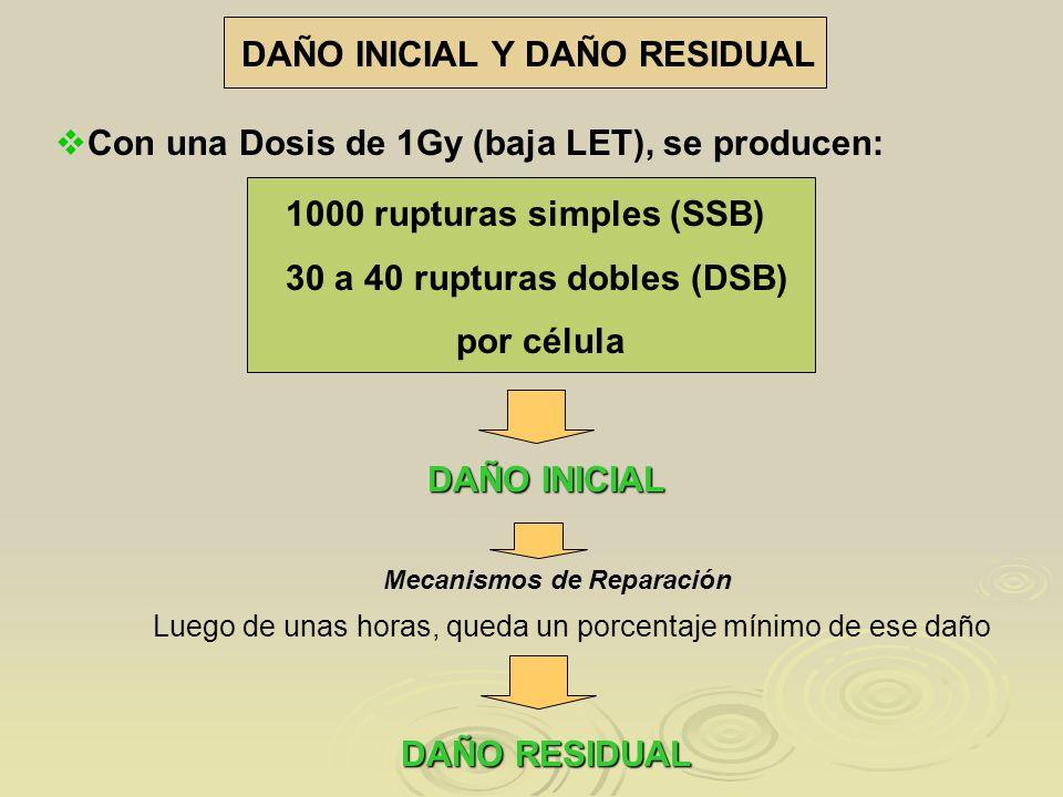 DAÑO INICIAL Y DAÑO RESIDUAL Con una Dosis de 1Gy (baja LET), se producen: 1000 rupturas simples (SSB) 30 a 40 rupturas dobles (DSB) por célula DAÑO I