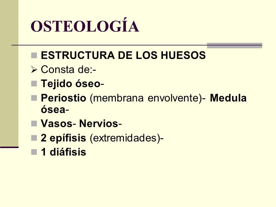 OSTEOLOGÍA ESTRUCTURA DE LOS HUESOS Consta de:- Tejido óseo- Periostio (membrana envolvente)- Medula ósea- Vasos- Nervios- 2 epífisis (extremidades)-