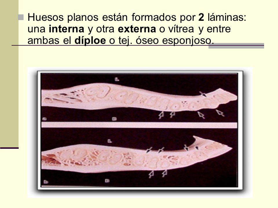 Huesos planos están formados por 2 láminas: una interna y otra externa o vítrea y entre ambas el díploe o tej. óseo esponjoso.