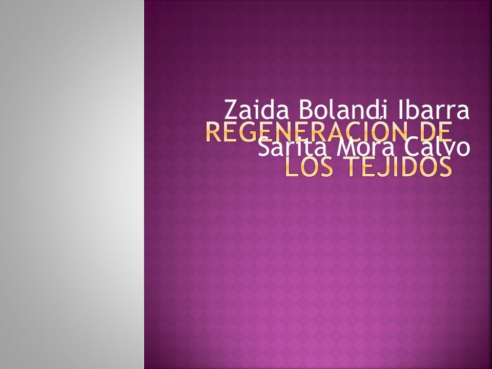 Zaida Bolandi Ibarra Sarita Mora Calvo