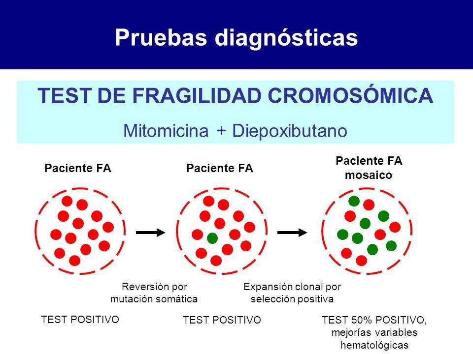 Pruebas diagnósticas TEST DE FRAGILIDAD CROMOSÓMICA Mitomicina + Diepoxibutano Paciente FA Paciente FA mosaico Reversión por mutación somática Expansi