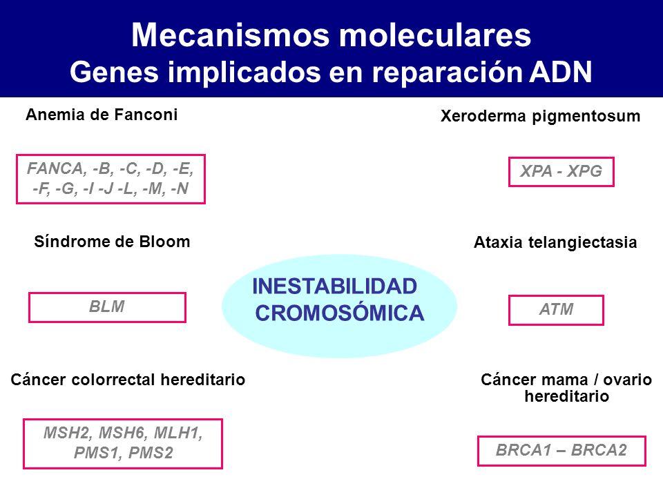 Anemia de Fanconi Síndrome de Bloom Ataxia telangiectasia Cáncer colorrectal hereditario Cáncer mama / ovario hereditario Xeroderma pigmentosum FANCA,