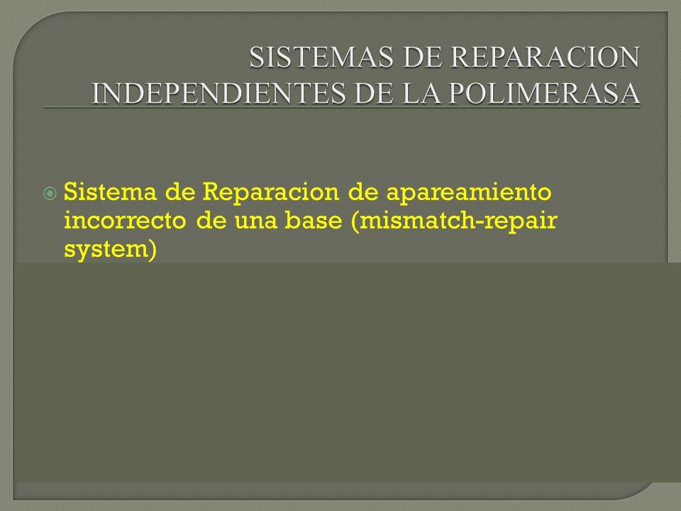 Sistema de Reparacion de apareamiento incorrecto de una base (mismatch-repair system) Sistema de Reparacion por escision de nucleotidos (NER system) o