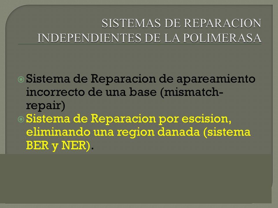 Sistema de Reparacion de apareamiento incorrecto de una base (mismatch- repair) Sistema de Reparacion por escision, eliminando una region danada (sist