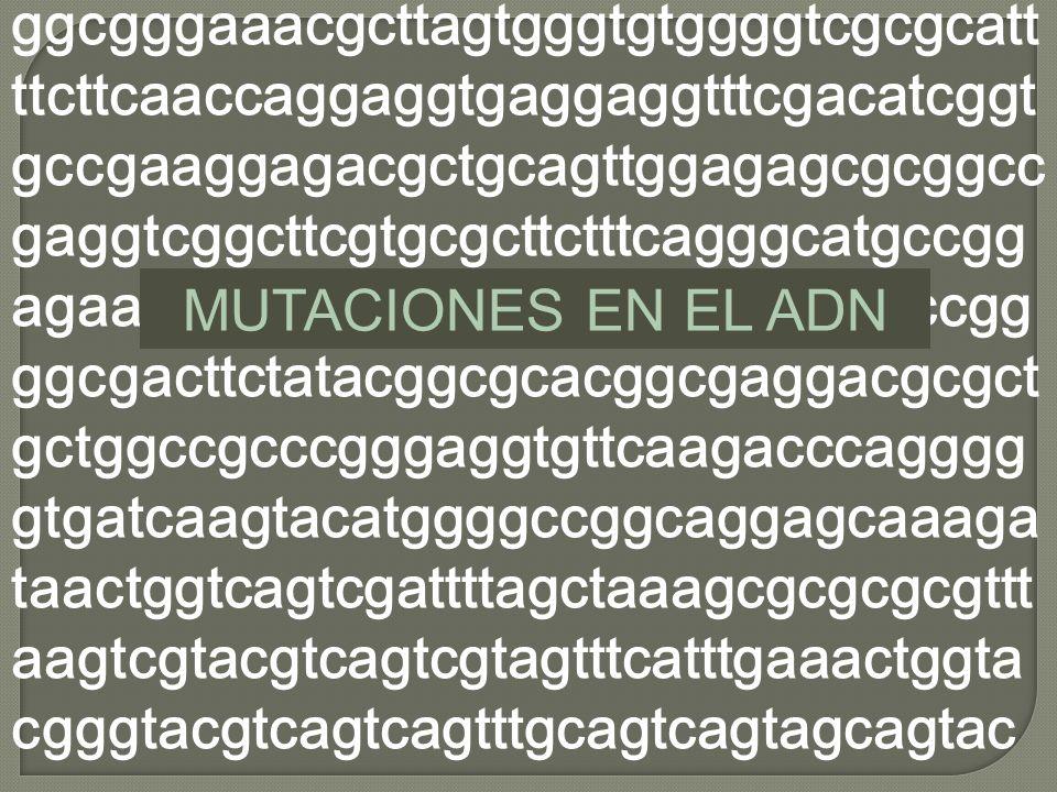Mutaciones del ADN Qué son? Por qué ocurren? Cómo se reparan? Qué pasa si no son reparadas?