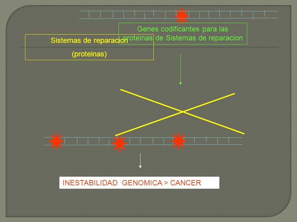 Sistemas de reparacion (proteinas) Genes codificantes para las proteinas de Sistemas de reparacion INESTABILIDAD GENOMICA > CANCER