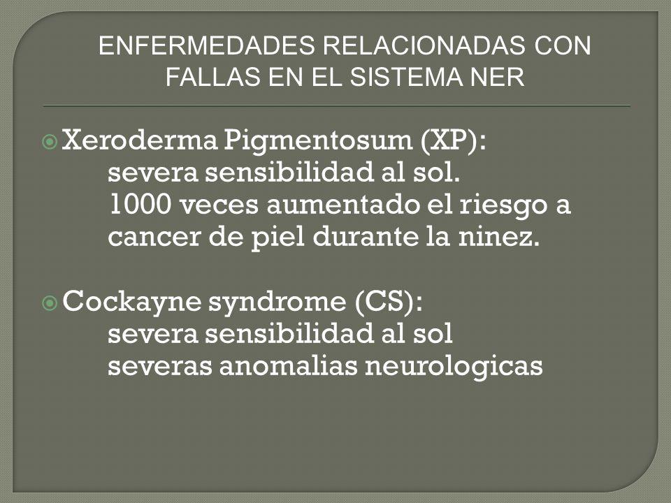 Xeroderma Pigmentosum (XP): severa sensibilidad al sol. 1000 veces aumentado el riesgo a cancer de piel durante la ninez. Cockayne syndrome (CS): seve