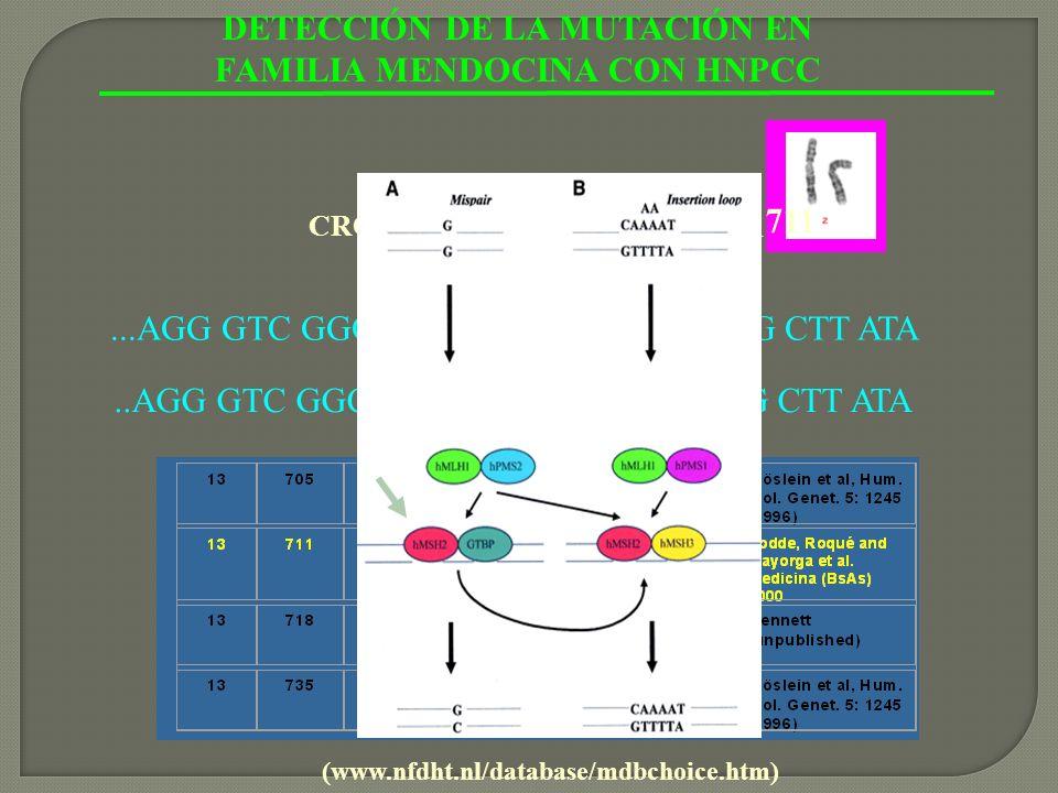 DETECCIÓN DE LA MUTACIÓN EN FAMILIA MENDOCINA CON HNPCC...AGG GTC GGC TTA CGA ACT GCT GGG CTT ATA arg..AGG GTC GGC TTA TGA ACT GCT GGG CTT ATA stop (w