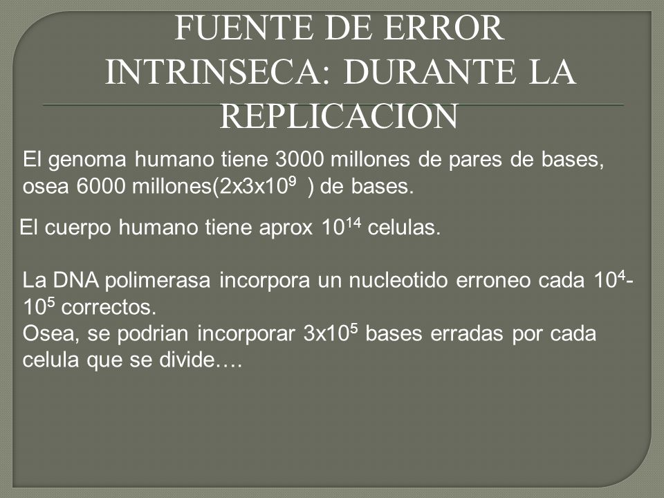 FUENTE DE ERROR INTRINSECA: DURANTE LA REPLICACION El genoma humano tiene 3000 millones de pares de bases, osea 6000 millones(2x3x10 9 ) de bases. El