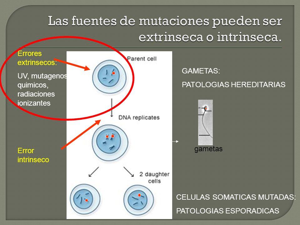 Error intrinseco Errores extrinsecos: UV, mutagenos quimicos, radiaciones ionizantes gametas CELULAS SOMATICAS MUTADAS: PATOLOGIAS ESPORADICAS GAMETAS