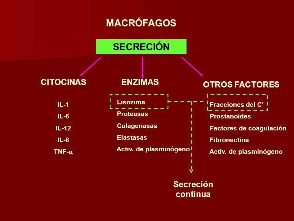 MACRÓFAGOS SECRECIÓN CITOCINASENZIMAS OTROS FACTORES IL-1 IL-6 IL-12 IL-8 TNF- Lisozima Proteasas Colagenasas Elastasas Activ. de plasminógeno Fraccio