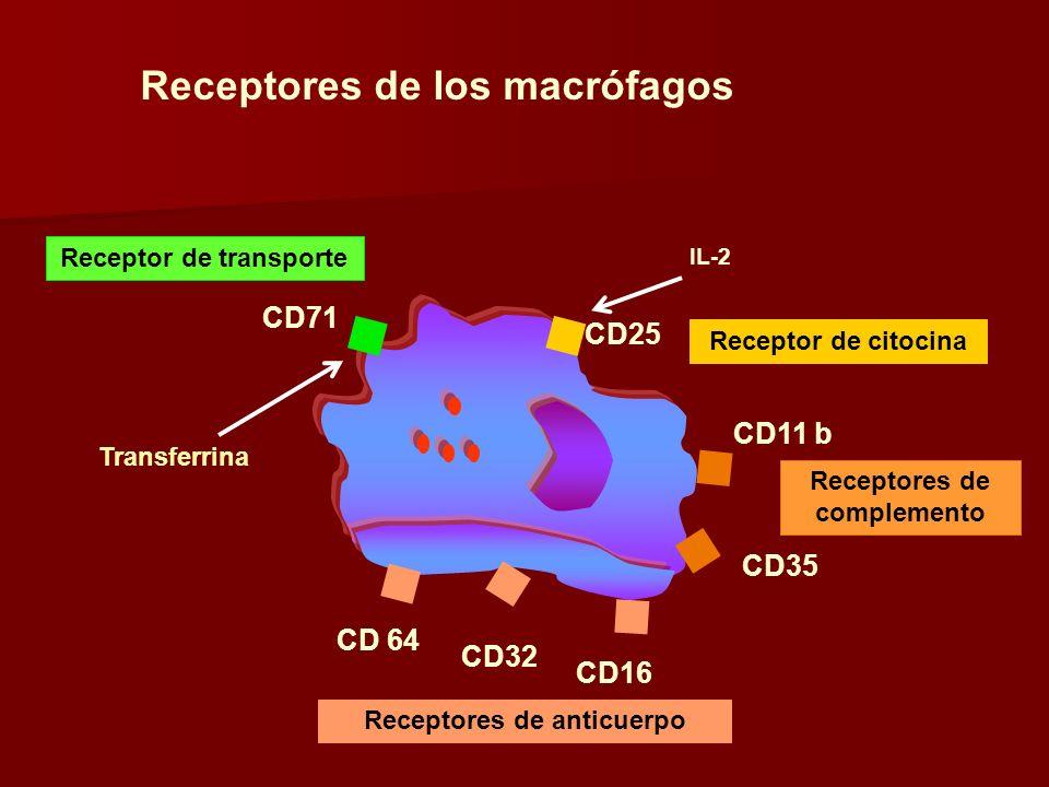 Receptores de los macrófagos CD35 CD11 b CD 64 CD32 CD16 CD71 CD25 Transferrina IL-2 Receptor de citocina Receptores de complemento Receptores de anti