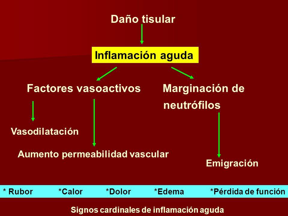 Daño tisular Inflamación aguda Factores vasoactivos Marginación de neutrófilos Vasodilatación Aumento permeabilidad vascular Emigración * Rubor *Calor *Dolor *Edema *Pérdida de función Signos cardinales de inflamación aguda