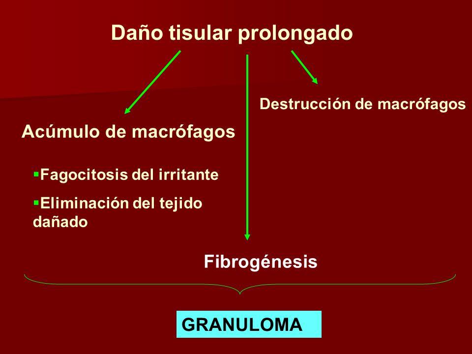 Daño tisular prolongado Acúmulo de macrófagos Destrucción de macrófagos Fagocitosis del irritante Eliminación del tejido dañado Fibrogénesis GRANULOMA