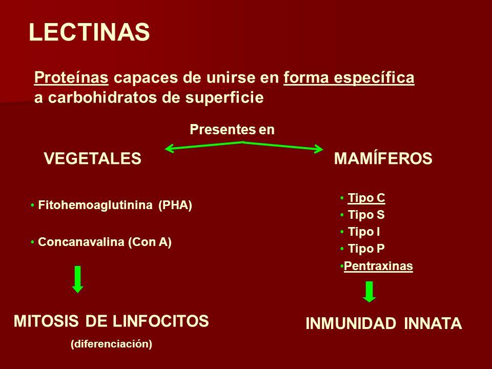 LECTINAS Proteínas capaces de unirse en forma específica a carbohidratos de superficie Presentes en VEGETALESMAMÍFEROS MITOSIS DE LINFOCITOS (diferenciación) Fitohemoaglutinina (PHA) Concanavalina (Con A) Tipo C Tipo S Tipo I Tipo P Pentraxinas INMUNIDAD INNATA