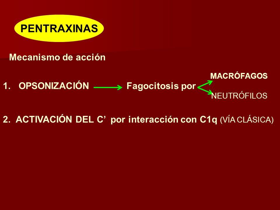PENTRAXINAS Mecanismo de acción 1.OPSONIZACIÓN Fagocitosis por 2.