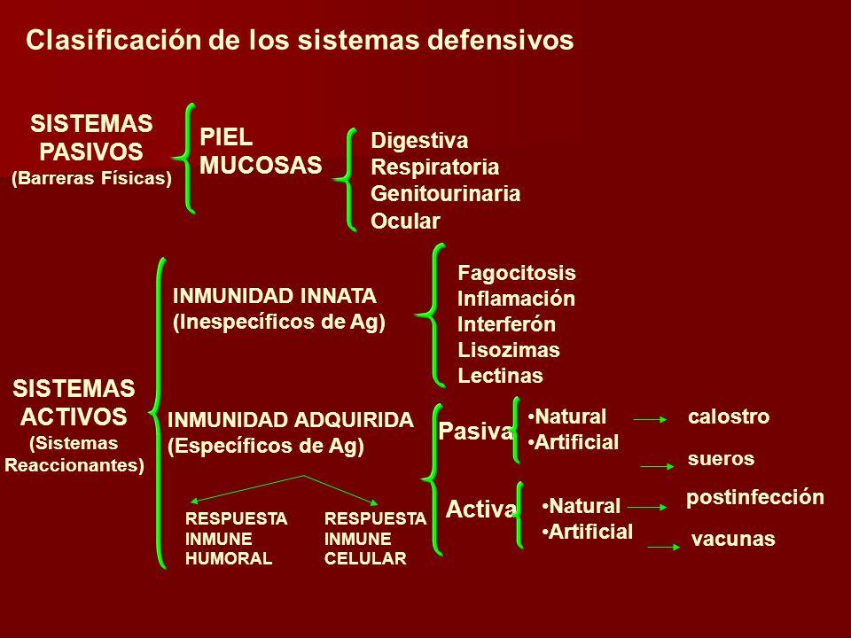 INMUNIDAD INNATA (Inespecíficos de Ag) Pasiva Activa SISTEMAS ACTIVOS (Sistemas Reaccionantes) Natural Artificial calostro sueros Natural Artificial postinfección vacunas RESPUESTA INMUNE HUMORAL RESPUESTA INMUNE CELULAR SISTEMAS PASIVOS (Barreras Físicas) PIEL MUCOSAS Digestiva Respiratoria Genitourinaria Ocular INMUNIDAD ADQUIRIDA (Específicos de Ag) Fagocitosis Inflamación Interferón Lisozimas Lectinas Clasificación de los sistemas defensivos