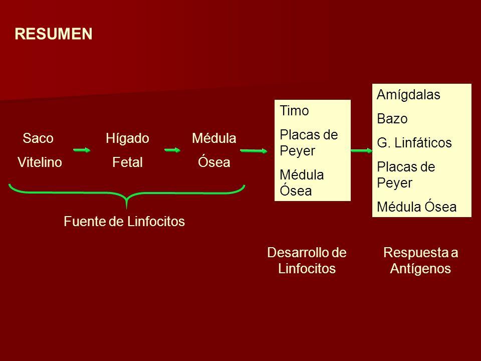 Saco Vitelino Hígado Fetal Médula Ósea Timo Placas de Peyer Médula Ósea Amígdalas Bazo G.