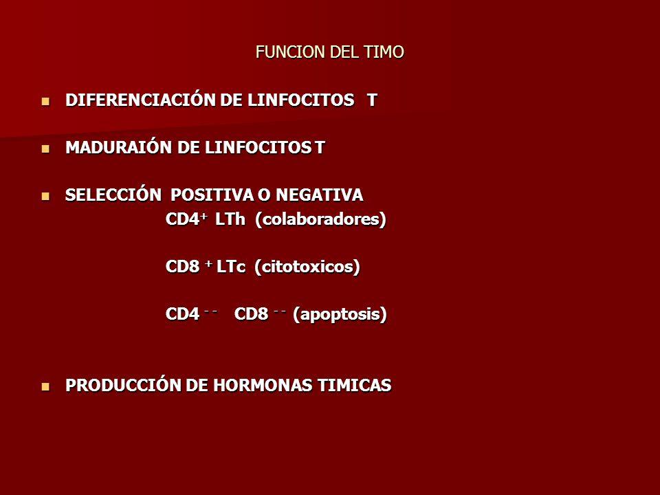 FUNCION DEL TIMO DIFERENCIACIÓN DE LINFOCITOS T DIFERENCIACIÓN DE LINFOCITOS T MADURAIÓN DE LINFOCITOS T MADURAIÓN DE LINFOCITOS T SELECCIÓN POSITIVA