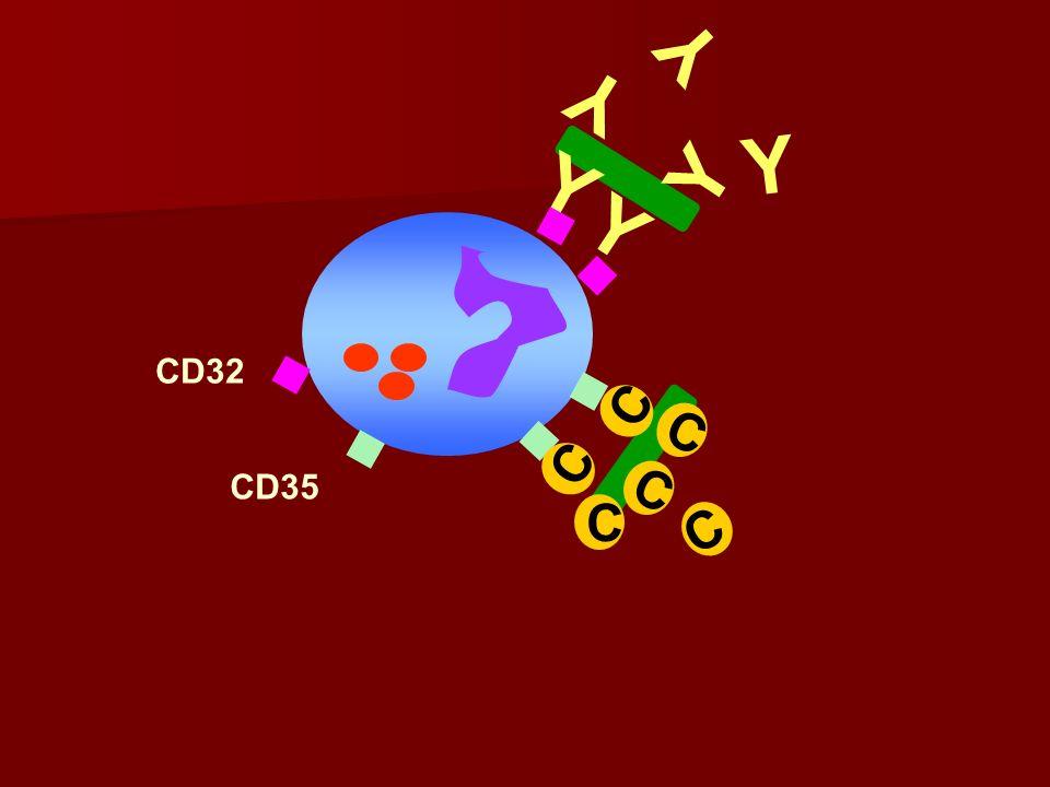 C CD35 CD32 Y Y Y Y C C C C Y Y C