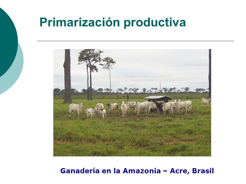 Primarización productiva Ganadería en la Amazonia – Acre, Brasil