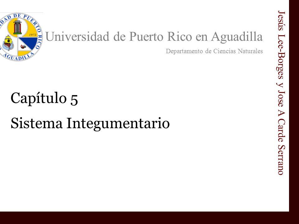 Universidad de Puerto Rico en Aguadilla Departamento de Ciencias Naturales Jesús Lee-Borges y Jose A Carde Serrano Capítulo 5 Sistema Integumentario