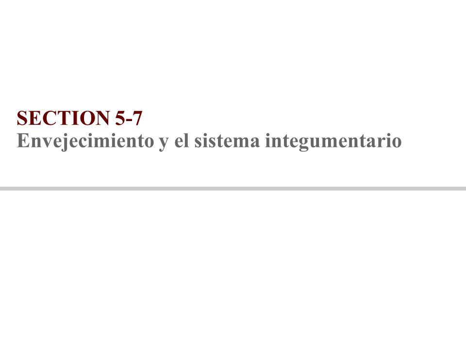 SECTION 5-7 Envejecimiento y el sistema integumentario
