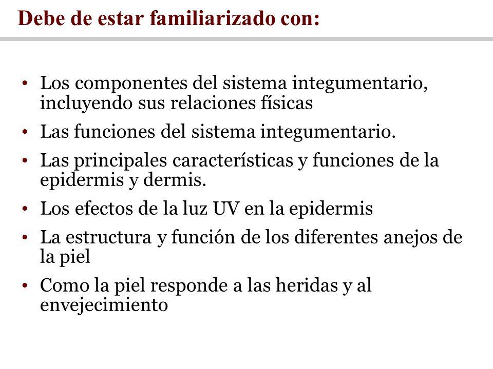 Los componentes del sistema integumentario, incluyendo sus relaciones físicas Las funciones del sistema integumentario. Las principales característica