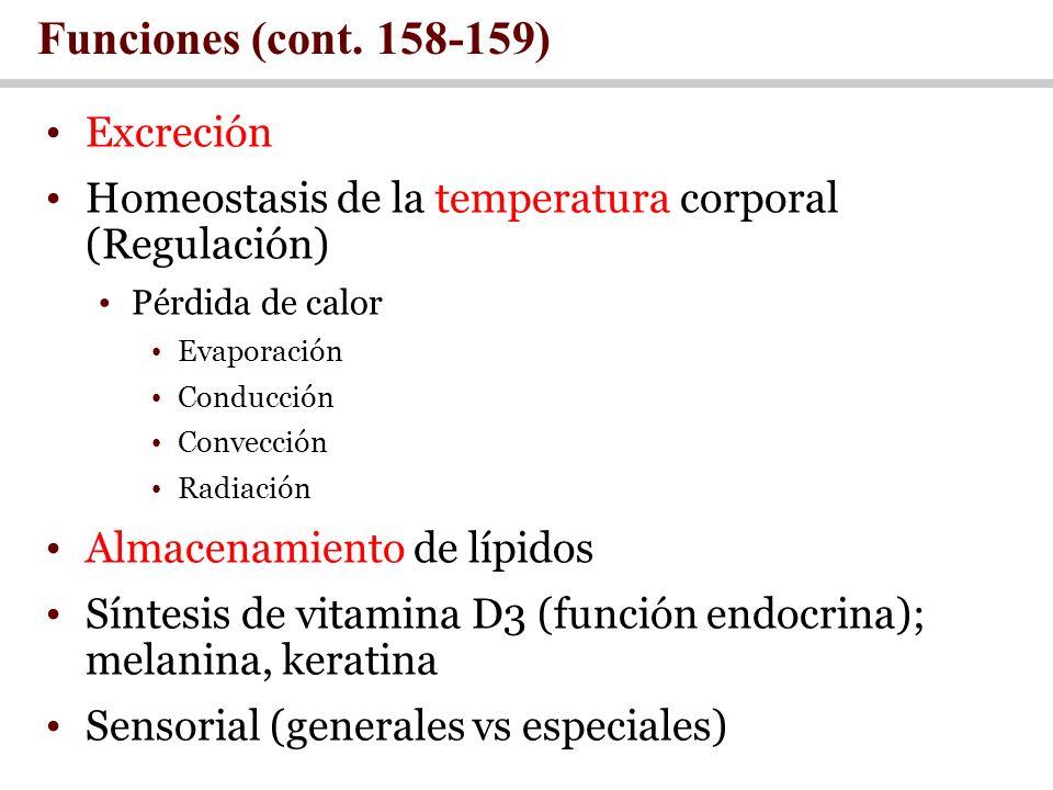 Funciones (cont. 158-159) Excreción Homeostasis de la temperatura corporal (Regulación) Pérdida de calor Evaporación Conducción Convección Radiación A