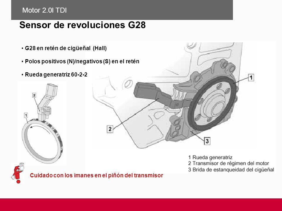 G28 en retén de cigüeñal (Hall) Polos positivos (N)/negativos (S) en el retén Rueda generatriz 60-2-2 Cuidado con los imanes en el piñón del transmiso