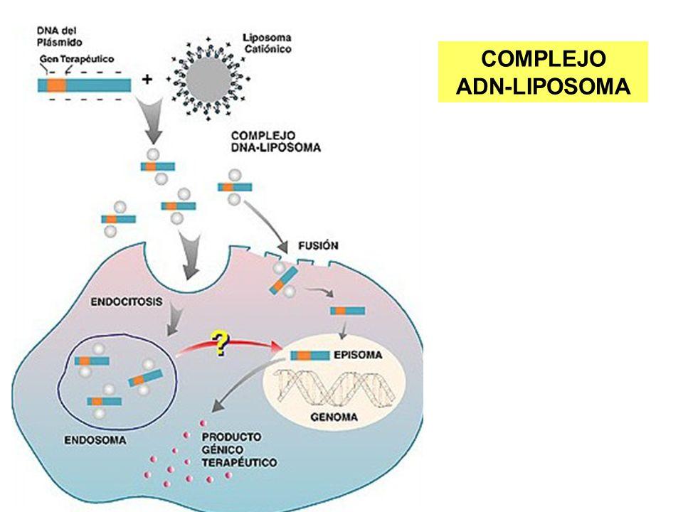 COMPLEJO ADN-LIPOSOMA