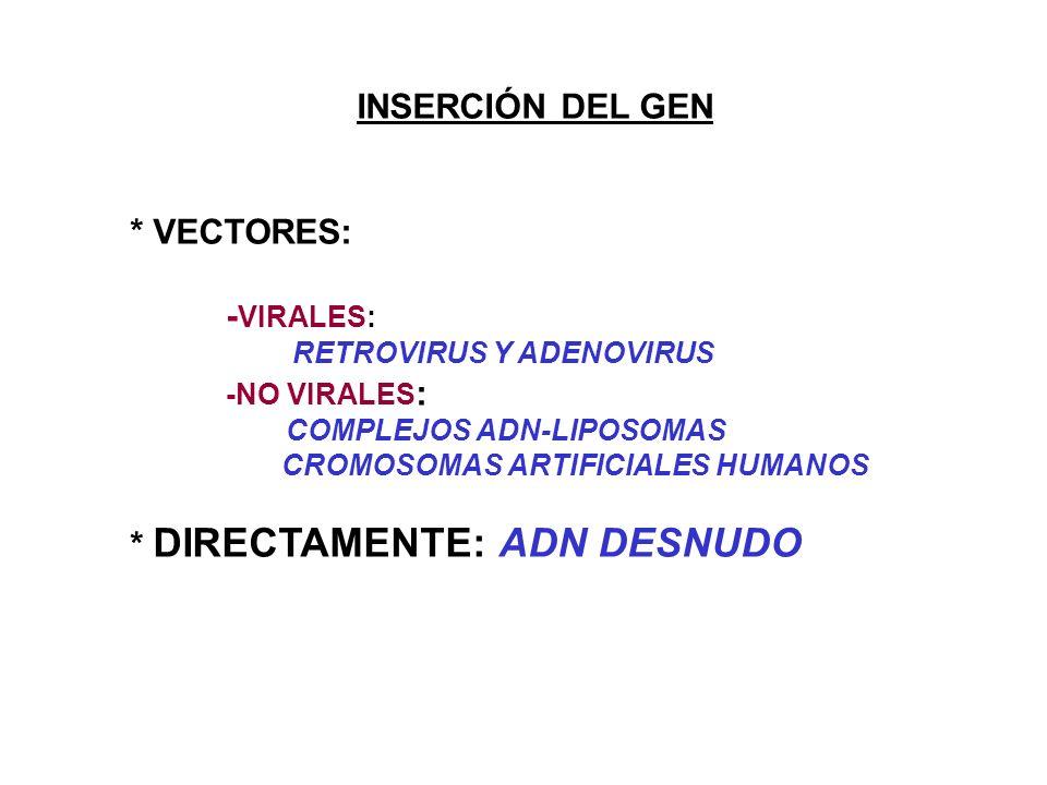 INSERCIÓN DEL GEN * VECTORES: - VIRALES: RETROVIRUS Y ADENOVIRUS -NO VIRALES : COMPLEJOS ADN-LIPOSOMAS CROMOSOMAS ARTIFICIALES HUMANOS * DIRECTAMENTE: