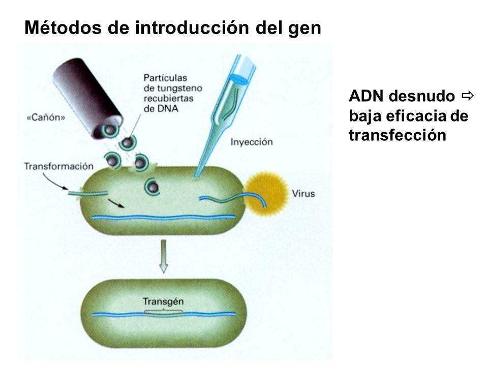 Métodos de introducción del gen ADN desnudo baja eficacia de transfección