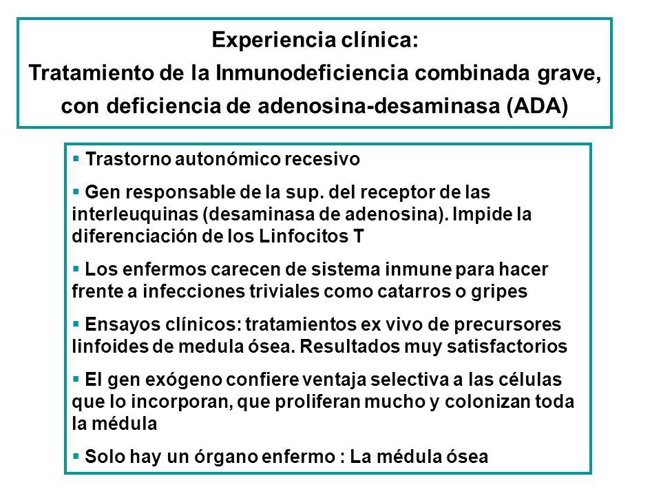 Trastorno autonómico recesivo Gen responsable de la sup. del receptor de las interleuquinas (desaminasa de adenosina). Impide la diferenciación de los