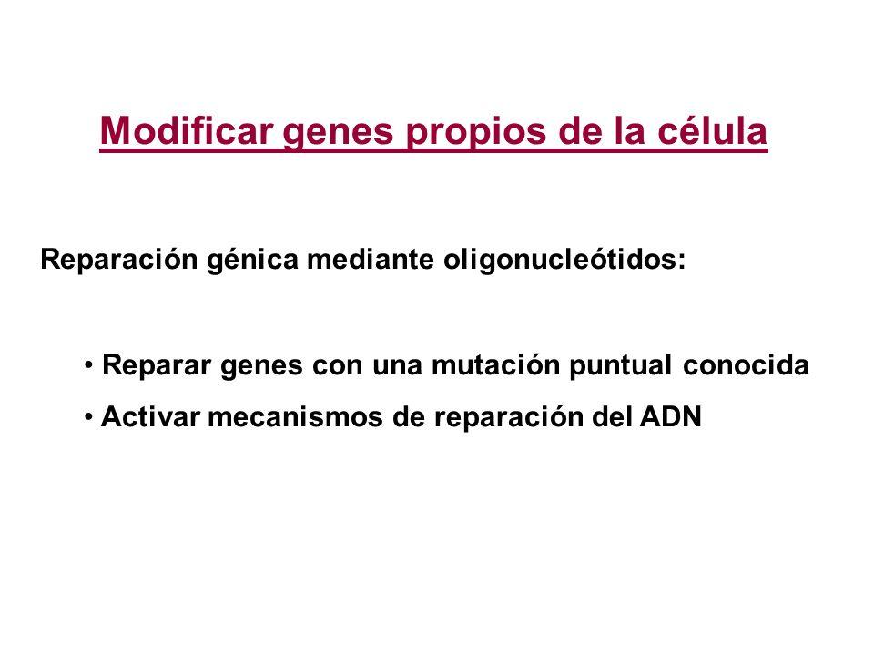 Modificar genes propios de la célula Reparación génica mediante oligonucleótidos: Reparar genes con una mutación puntual conocida Activar mecanismos d